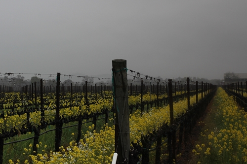 another image of Flora Springs' Holy Smoke Vineyard in Oakville