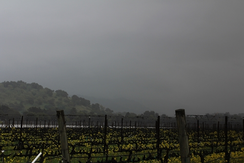 image of Flora Springs' Holy Smoke Vineyard next to Silver Oak