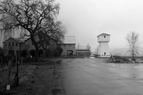 image of the iconic tower and oak tree found at the Silver Oak Winery