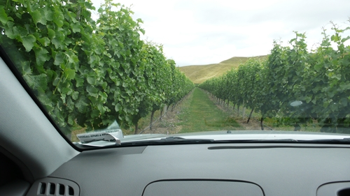 image from a vineyard drive