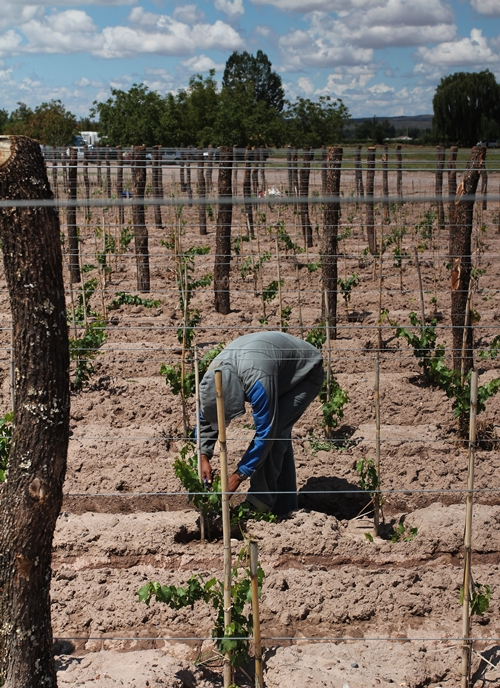 image of vineyard management next to the Vina Cobos Winery