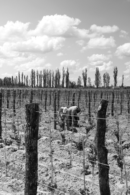 image of vineyard workers next to Vina Cobos