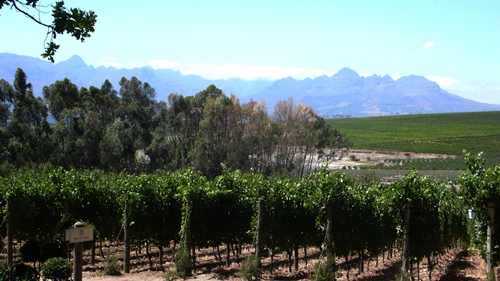 image of a vineyard and its view at De Morgenzon