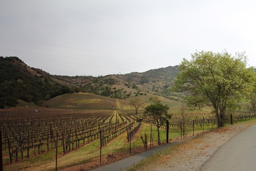 Schweizer Vineyards in the Stags Leap District, positioned next to Shafer Vineyards